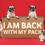 The Pug is back with its pack!